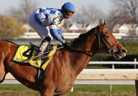 28 November 2009: Buddy's Saint and jockey Jose Lezcano win The Remsen at Aqueduct Racetrack in Ozone Park NY.