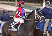 6 March 2010: Yawanna Twist and jockey Edgar Prado go to the post for The Gotham at Aqueduct Racetrack in Ozone Park NY.