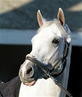 /horse/Hansen