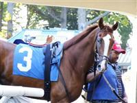 /horse/Gee Linz