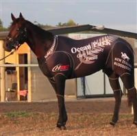 /horse/Ocean Park 1