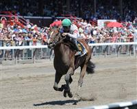 /horse/Palace