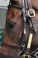 /horse/Millionreasonswhy