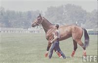 /horse/Canonero II