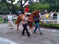 /horse/Tiger Bourbon