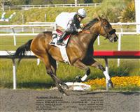 /horse/Running Isabella