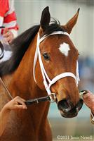 /horse/Havre de Grace