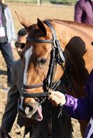 /horse/Dayatthespa
