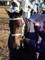 /horse/Miss Netta
