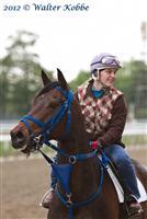 /horse/Sandyinthesun