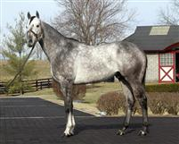 Graydar at Taylor Made.