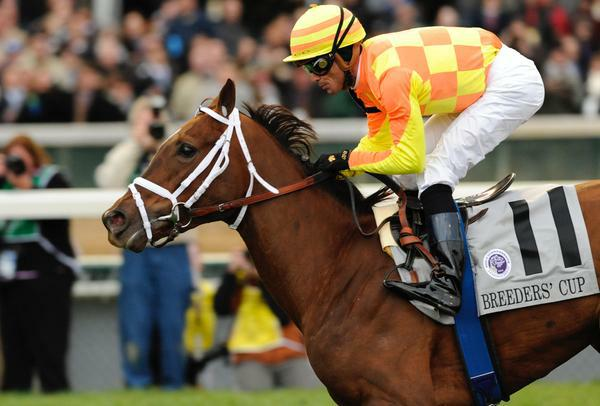 05 November 2010: More Than Real and Garrett Gomez win the Breeders' Cup Juvenille Fillies' Turf at Churchill Downs, Louisville, KY.