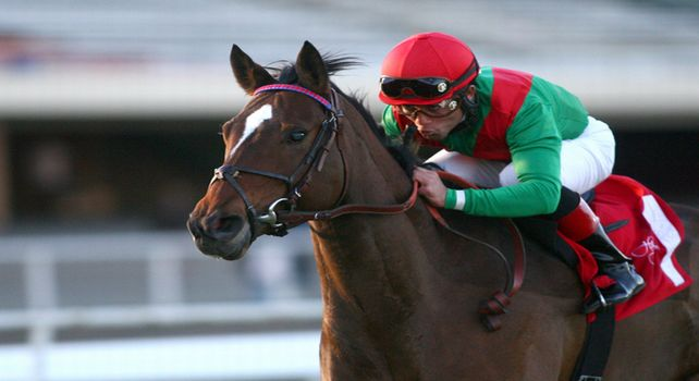 03 October 2010: Gypsy's Warning and Joel Rosario win the Matriarch Stakes(GI) at Hollywood Park, Inglewood, CA