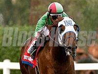 /horse/G G Ryder