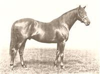 /horse/Swynford