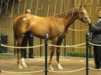 /horse/Vallenzeri