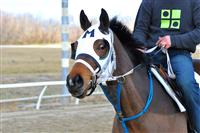 /horse/Medalbu