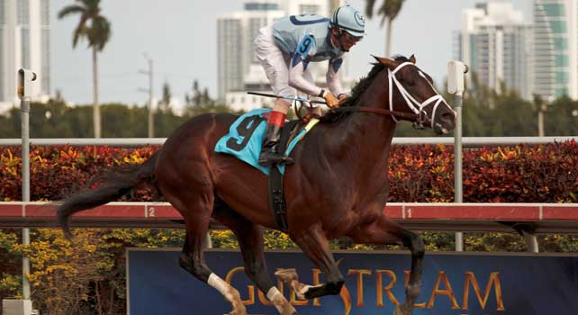 Verrazano with jockey John Velazquez up wins debut in dazzling fashion at Gulfstream Park. Hallandale Beach Florida. 01-01-2013