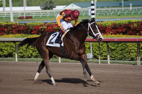 Broadway's Alibi with John Velazquez up winning her 2nd of three starts for trainer Todd Pletcher in the 5th race at Gulfstream Park at Hallandale Beach Florida. December 15 2011