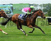 Gitchee Goomie winning the 2012 Mount Vernon.