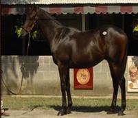 /horse/Acaffella