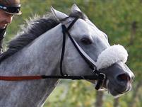 /horse/Afleet Again
