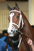 Ailalea before the 2009 Tempted Stakes at Aqueduct