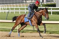 American Pharoah works well in preparation for the Belmont Stakes