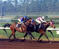 Ancient Title defeating Woodland Pines in the 1974 Los Angeles Handicap