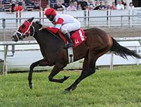 Animal Style wins the 2013 Van Berg Stakes at Fair Grounds.