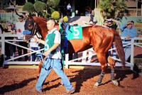 Chitu before his race at Santa Anita Park.