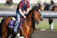 Beethoven preparing for the Breeders' Cup at Santa Anita - 2009