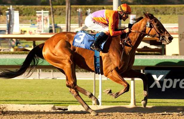 Beholder wins 2013 Zenyatta Stakes.