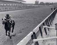 /horse/Secretariat