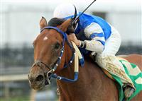 Va bred, Chedi sets new track record at Colonial Downs for Va bred trainer Christopher Crocker and Crocker Racing Stable