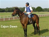 /horse/Cajun Dawn