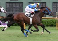 /horse/Cajun Conquest