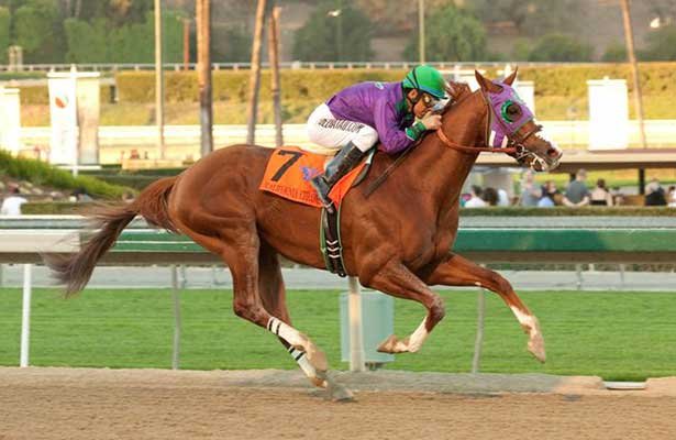 California Chrome wins 2014 Cal Cup Derby