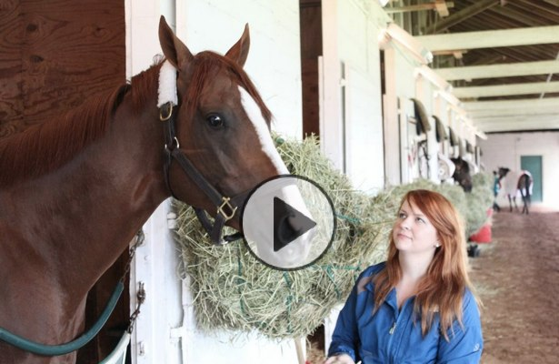 Meeting California Chrome