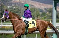 California Chrome confirmed for Hollywood Derby