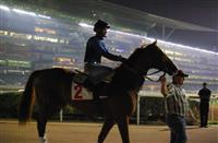 Gearing Up for the 2015 Dubai World Cup
