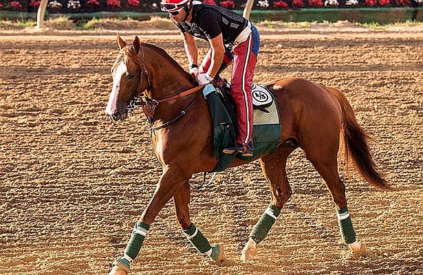 California Chrome Pimlico 615 X 400