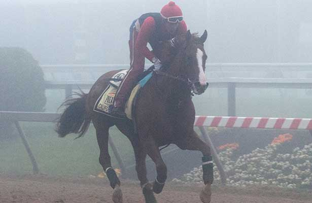 California Chrome prepares for Preakness 2014.