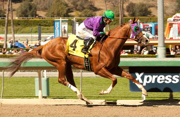 California Chrome wins 2014 San Felipe.