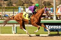 California Chrome Breathtaking in San Felipe
