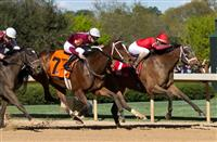 Call Pat rallies past Untapable for Azeri victory