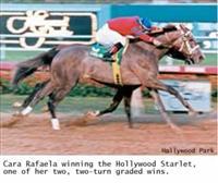/horse/Cara Rafaela