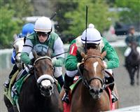 /horse/Catching Reys