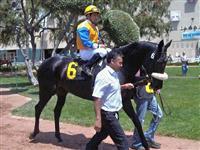 /horse/Chalula One