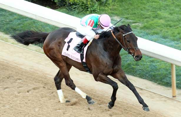 Close Hatches wins 2014 Apple Blossom.